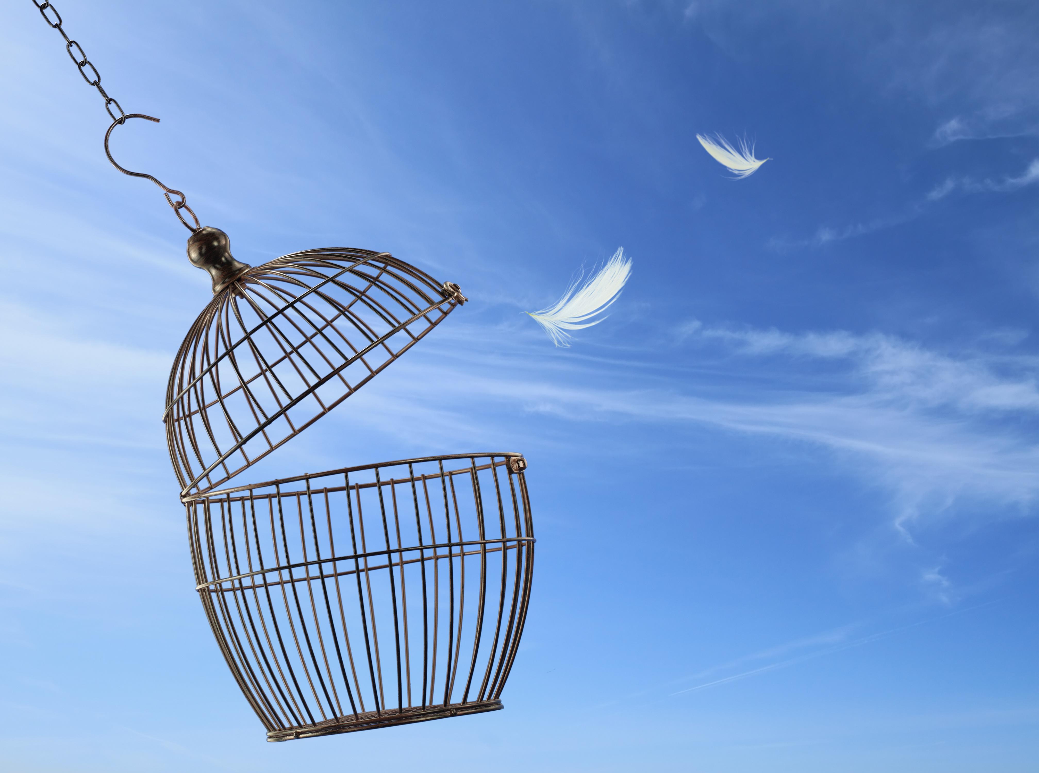 Coach Page Empty Birdcage